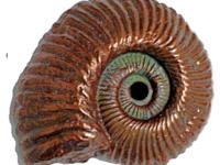 fossil-nautilus-copper-small